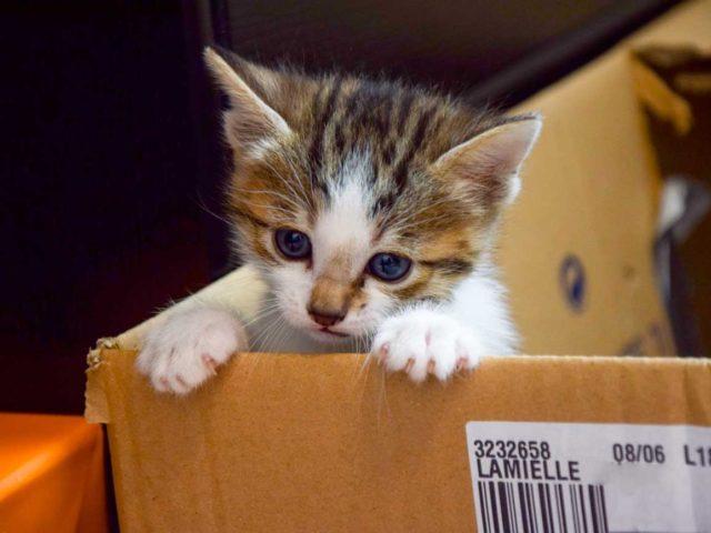Maison en carton pour chats et chatons